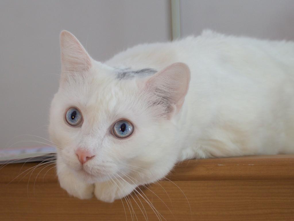 IMAGE: http://wavehh.dyndns.org/cats/new/.medpics/img_8635_editauto_med.jpg