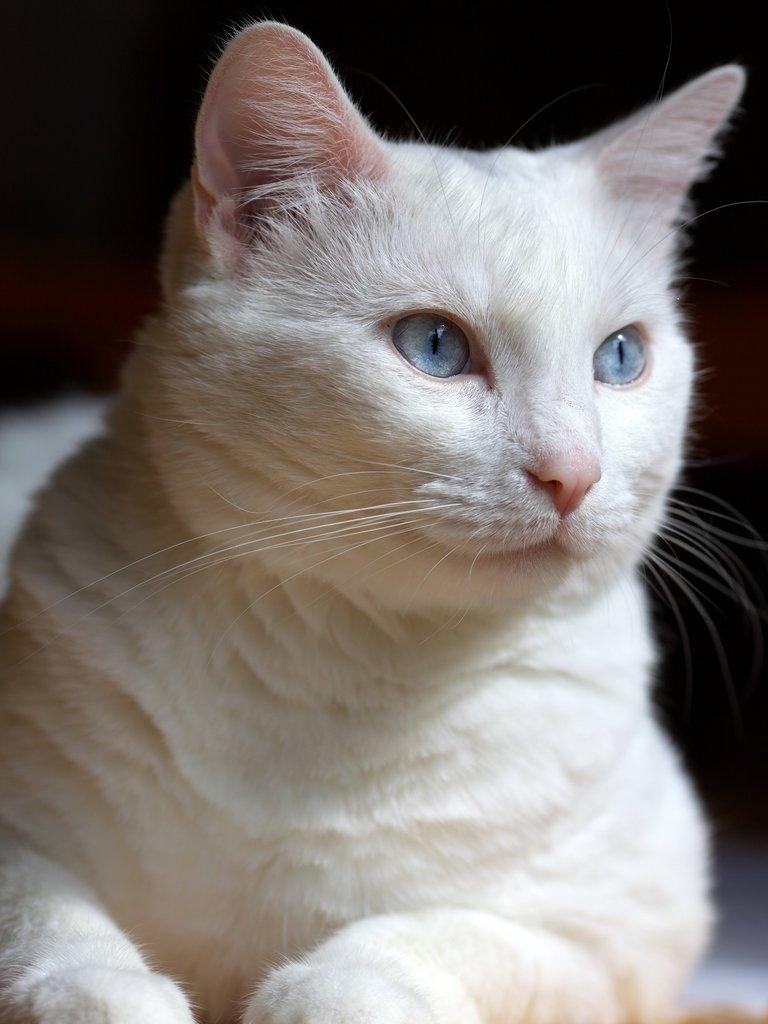 IMAGE: http://wavehh.dyndns.org/photos/cat201206/.medpics/img_4853_135.0mm-250-f4.0-100iso_editauto_med.jpg